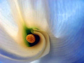 2014-05-03_inside_the_lily