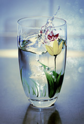 2014-05-04_water_with_flower