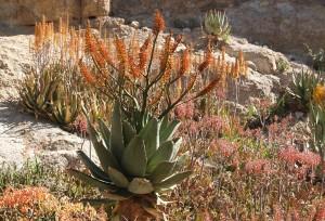 Health Wellness Drought Desert